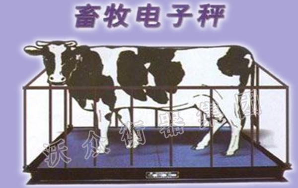 畜牧秤的不同类型